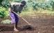 Danmark vil sætte skub i økologien i Afrika