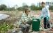 Grøn teknologi kan fremstille billig bioplast