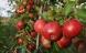Spis økologisk hvis du vil undgå giftrester
