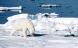 Rød klima-alarm i Arktis