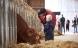 Økologisk landbrug dækker 8,1 procent af arealet