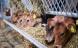 DLG solgte 30 procent mere økologisk foder