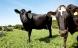 Økologiske mælkebønder tjener penge