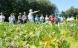 Danske øko-bønder kan dyrke sojabønner