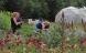 Økologiens Have: Surt at Odder topper på giftliste