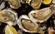 Pas på østers og muslinger ved Vestkysten