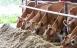Arla vil skære 30 pct. af klimaudslip på ti år