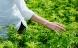 Hamp kan blive til miljøvenligt modetøj