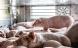 Tusindvis af eksportgrise dør inden de har forladt landet