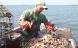 Havbønder er de nye grønne helte