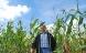 Stop for dansk støtte til biogas af majs