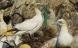 Mikroplast dræber fisk og havpattedyr