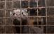 Holland forbyder minkavl