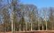 Gribskov forandres i et galopperende tempo