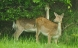 Ny dyrehave skal trække turister til Vendsyssel
