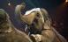 Danskerne ønsker forbud mod vilde dyr i cirkus