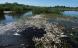 Iltsvind har taget livet af titusinder af fisk i Filsø