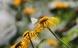 Haveejere kommer sommerfuglene til undsætning
