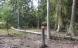 For meget kobber kan forgifte vildtet i Gribskov