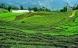 Indisk delstat bliver 100 procent økologisk