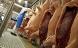 Ulovlig slagter ved Sæby lukkes