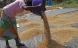 Teamwork giver succes for øko-bønder i Uganda