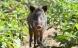 Der skal være huller til smådyr i vildsvinehegnet