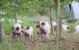 Coop-mærke for dyrevelfærd løfter salget