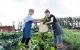 Vær med til at dyrke grønsager i Bella Byhave