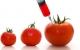 USA: Europa skal acceptere GMO