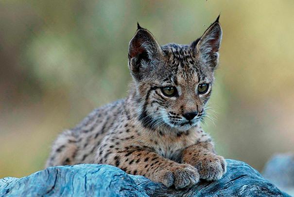 verdens mest truede dyr